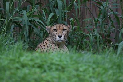 zoo2009Cat2b