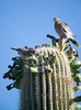Arizona Botanical Garden