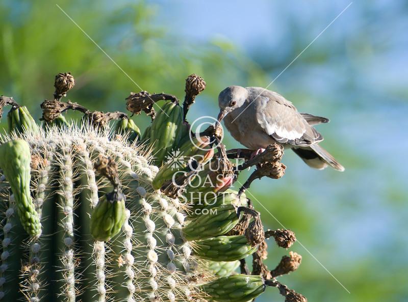 Arizona Botanical Garden