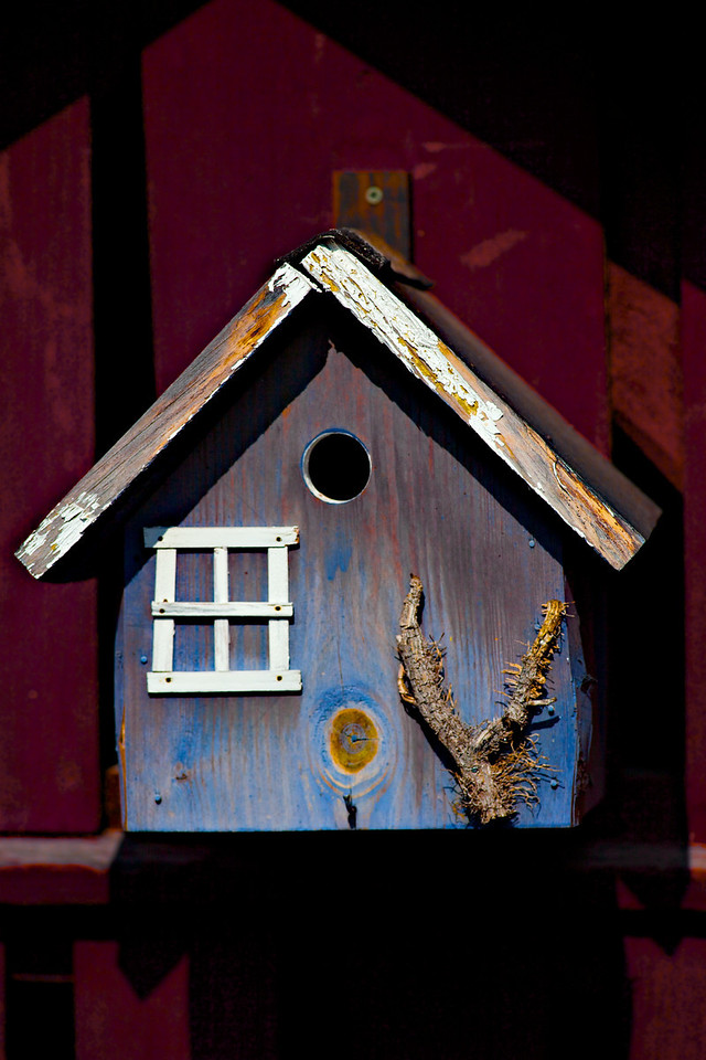 Week 15 2010 - Bird House - 5D2 and  OM180/2 - after comments about saturation last week I thought I would play so I turned saturation right up and then found the red looks terrible so toned the red channel down.