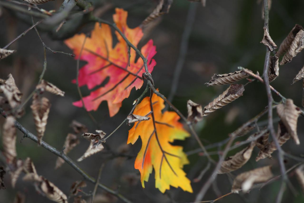 Week 14 - strange leaves  5D2 and OM90/2
