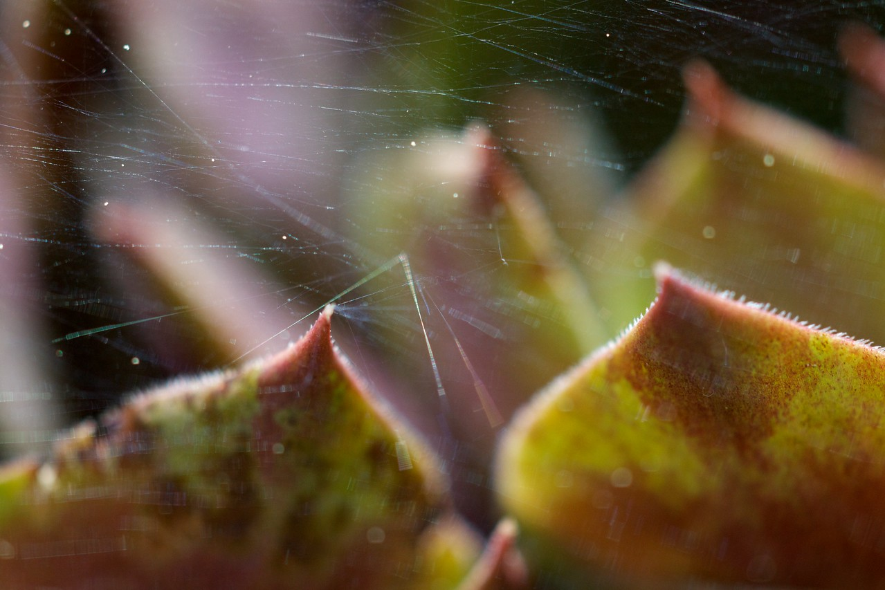 Week 16 - Web of deceit - This is a cheat as it was taken in Week 18 but as I didn't have chance to take any pictures during week 16 I thought I would see if I could get away with it. Canon 5D2 with OM extension tube and macro 80/4