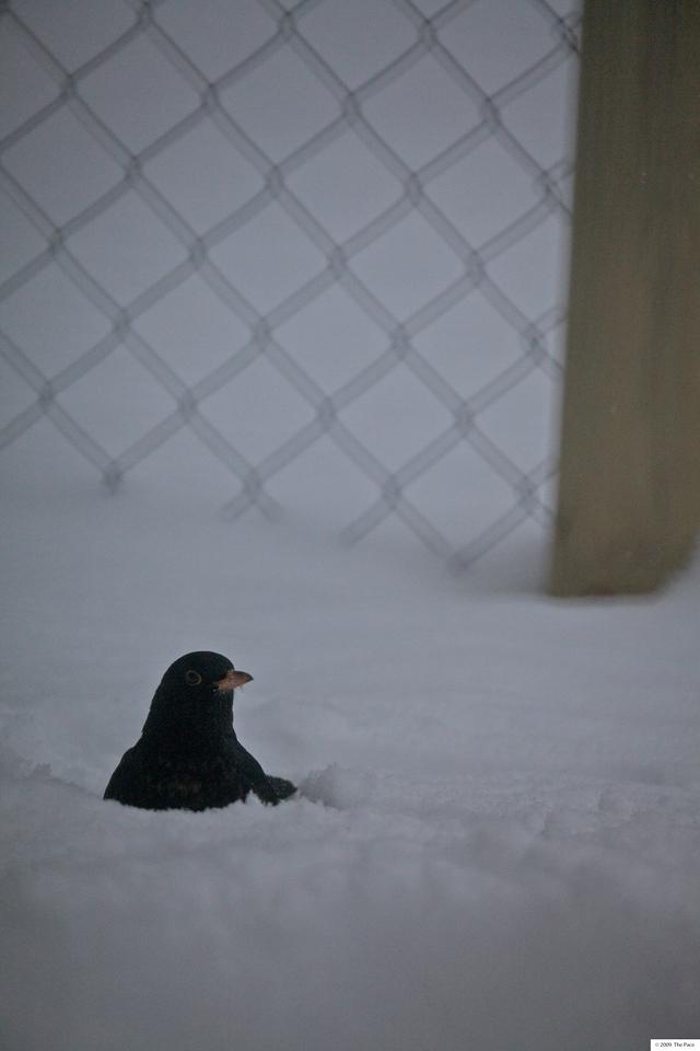 Week 5 2010 - snow bath 5D2 om 500/8