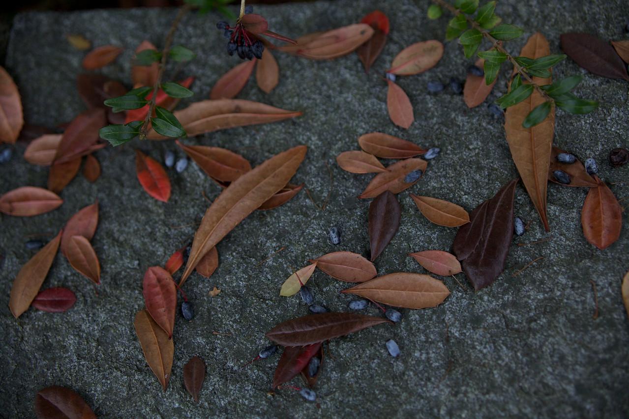 Week 49 - plant debris