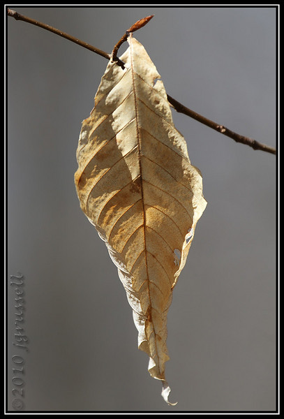 and leaves...
