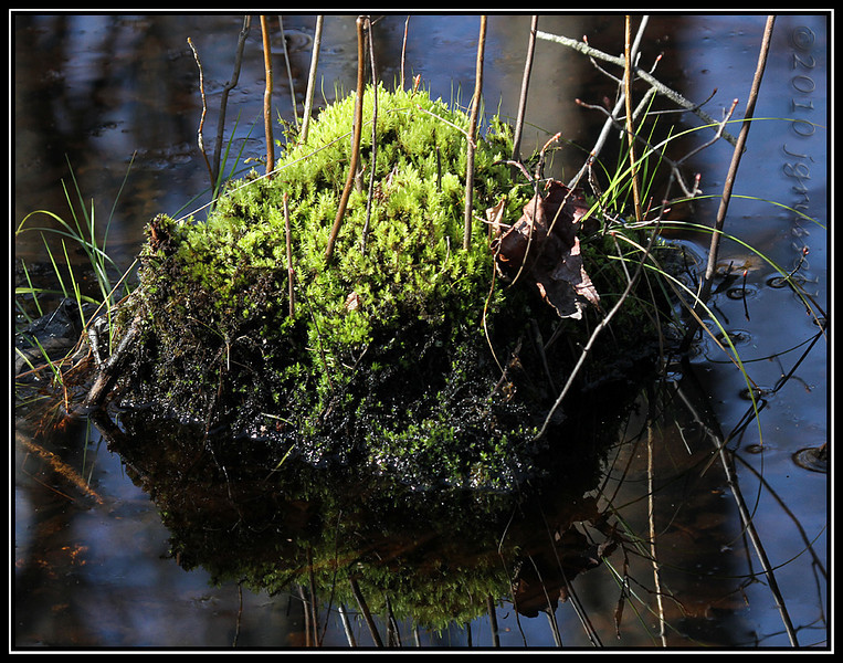 and more moss...