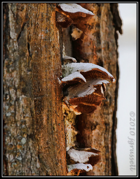 and shelf fungus...