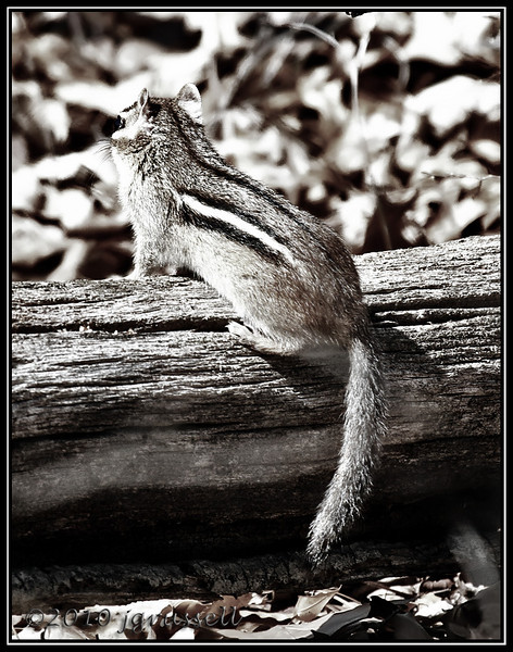 There were other critters though... this chipmunk, for one.
