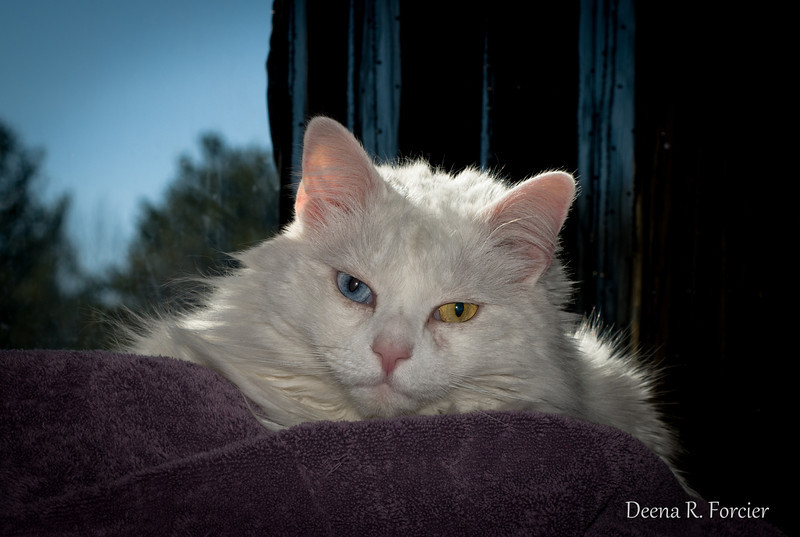 02-16-2011: Scruffy Kitty
