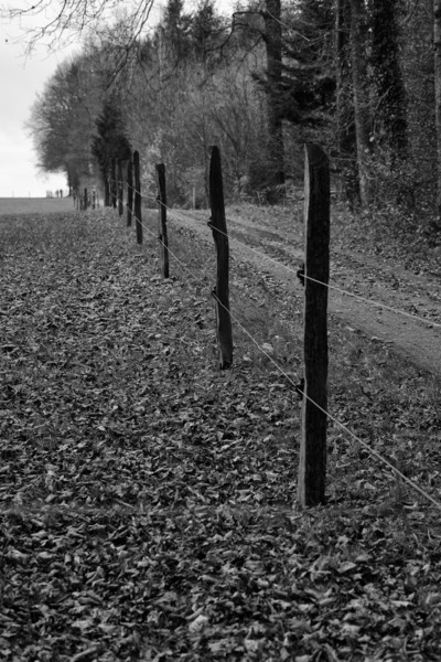 Fence posts with distant figures