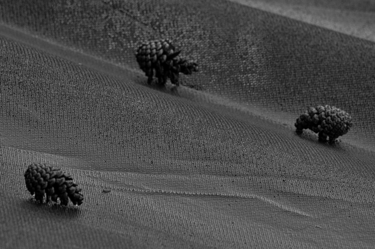 Pine Cone Safari<br /> Kerstin pointed this out instructing me to act fast before they closed. They really do look like animals don't they?