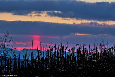12-18-13: Sunrise in a column, through a cornfield.
