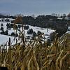 11-29-13: snowy field, Ridge Road