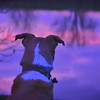 12-3-14: Max, at sunrise on the North River.