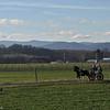 11-30-14: Pony cart, Dry River Road