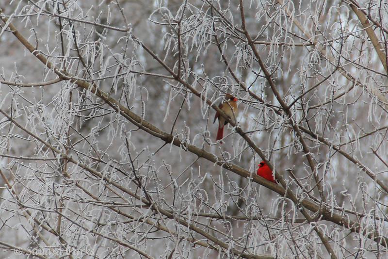 5-4-14 Cardinals at Wildwood