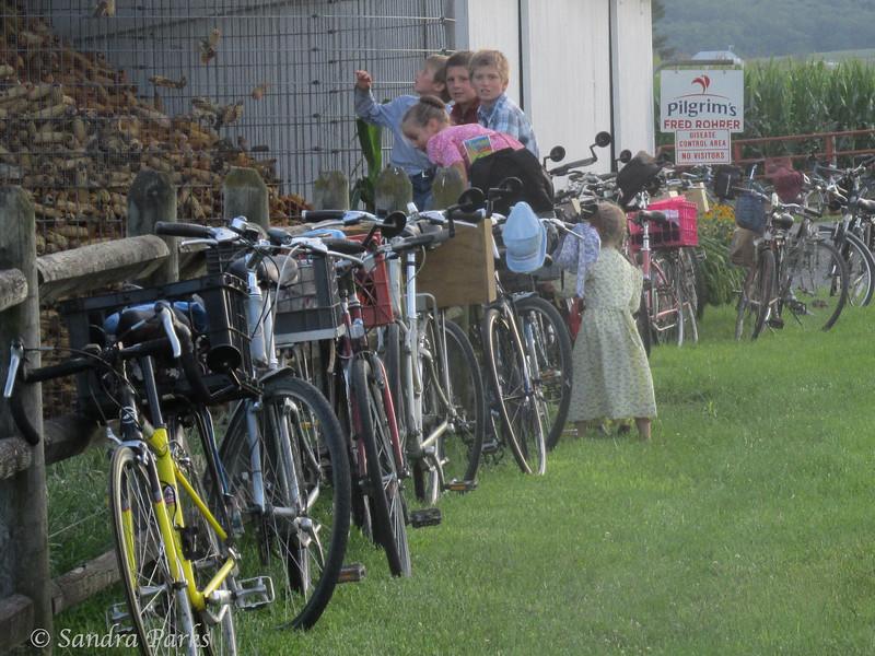 7-25-14: Mennonite kids. And bikes