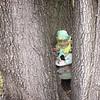12-20-14: Lost leprechaun, in Lilly