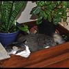 Zandi can sleep anywhere!