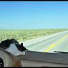 Zandi Snoozing on the dashboard.