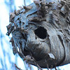 11-23-15: Wasp's nest