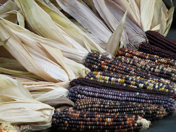 9-30-15: Indian corn