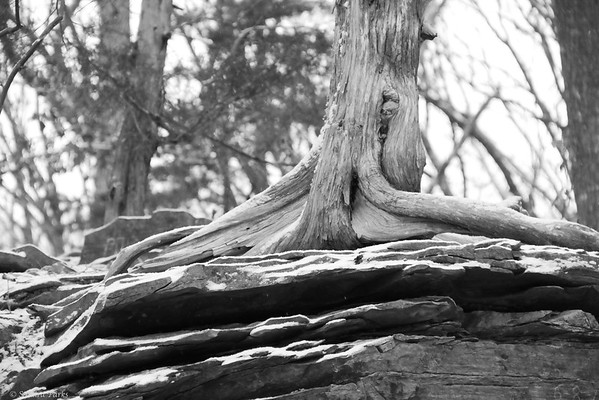 1-14-14: Roots