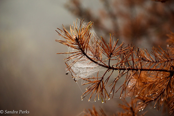 11-29-15: webs in fog
