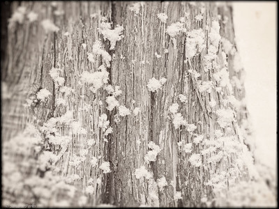 1-14-15: snow, on a tree at Natural Chimneys