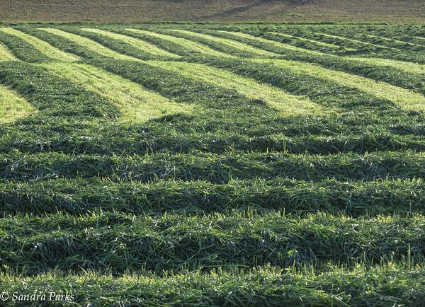 4-23-15: fresh cut hay