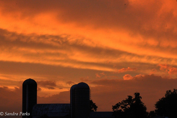 6-23-15: Sunset, Cannery Woods