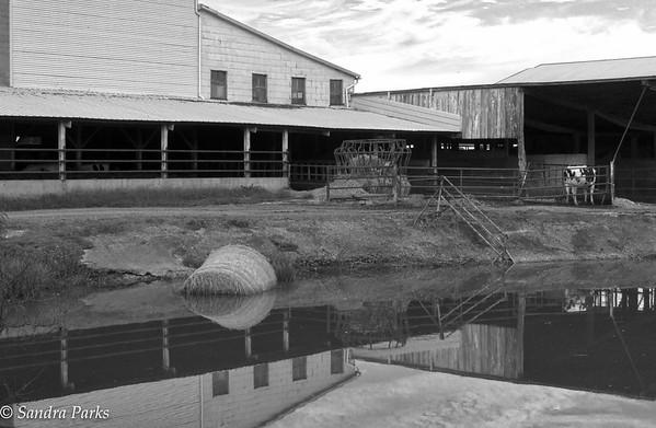 10-6-15: sunken hay bale