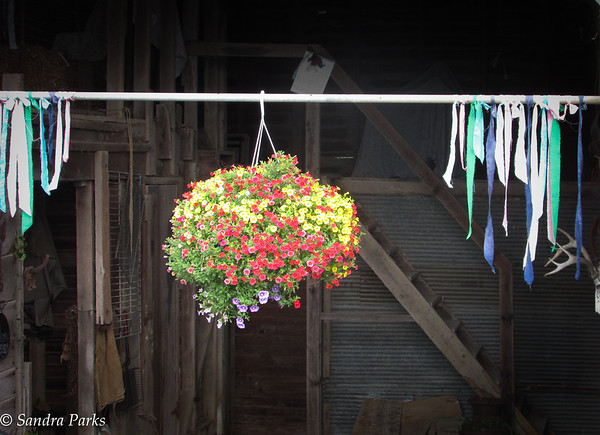 6-26-15: shed decorations.