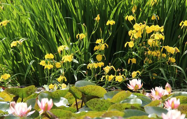5-20-15: Lilies