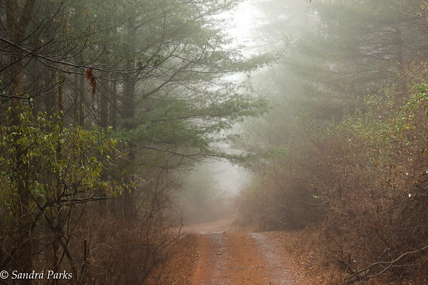 11-29-15: the road ahead