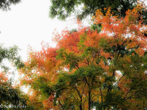 10-6-15: Fall beginning