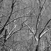 1-14-14: Into the woods