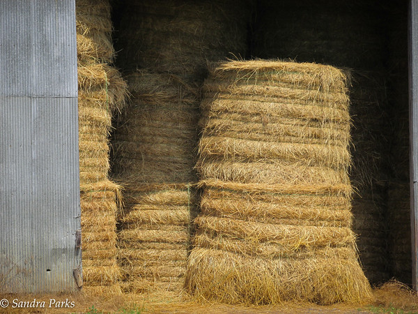 6-21-15: Hay there.