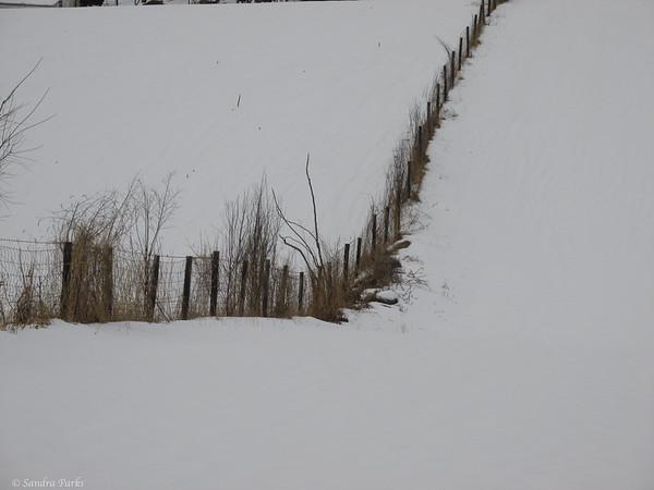 2-25-15: Fence row, Limestone Lane