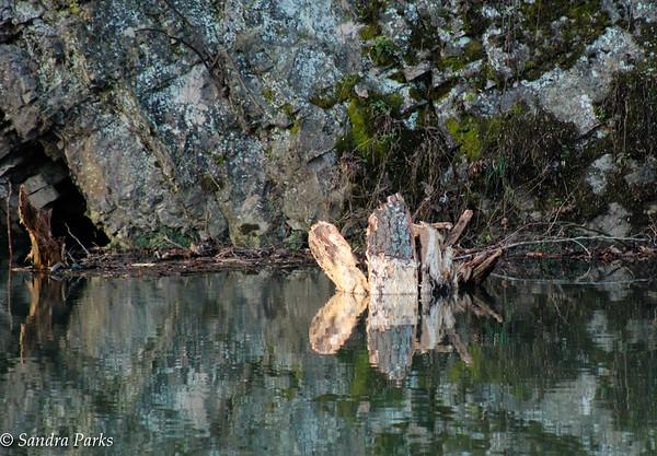 11-22-15: Fallen tree, North River