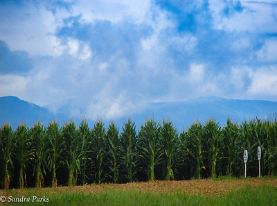 8-21-16: Mountains and clouds and corn