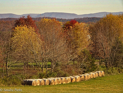 11-18-16:Spring Hill