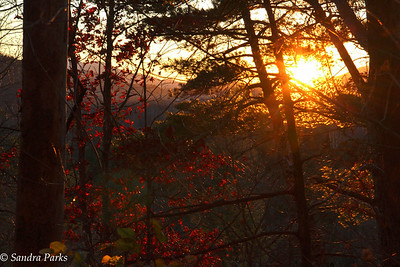 11-21-16: Sunset in the forest