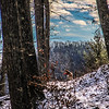 12-31-16: On Shenandoah Mountain. Me, my dog, and my Irish coffee.
