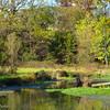 10-29-16: Spring Creek