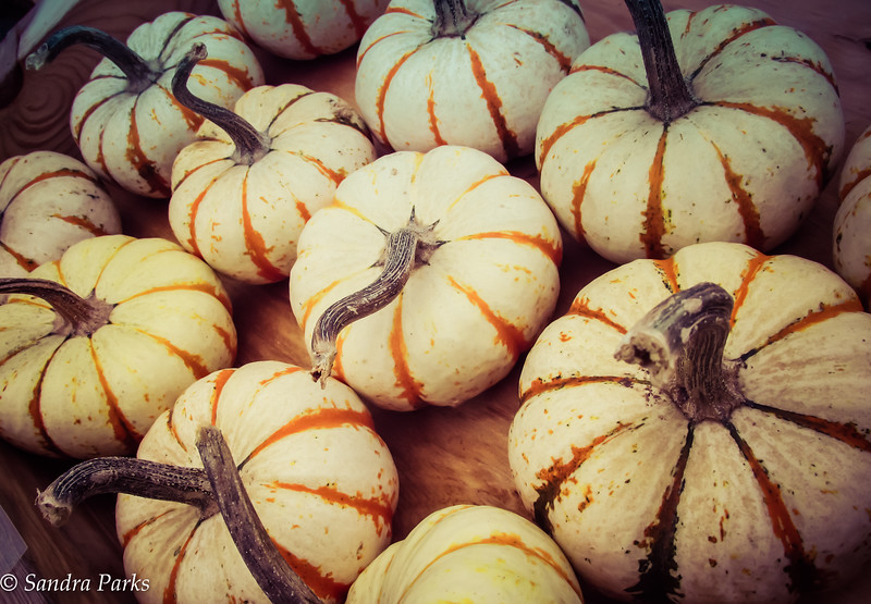 9-15-16: roadside pumpkins