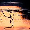 11-26-16: Heron at dawn