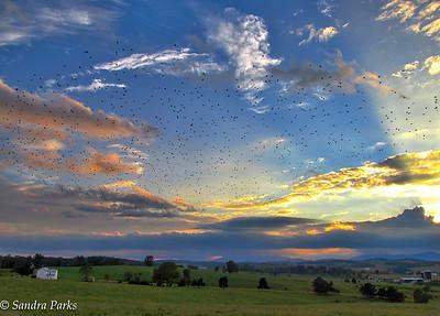 9-19-16: Birds flying, Centerville