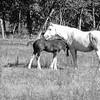 9-23-16: mama and baby