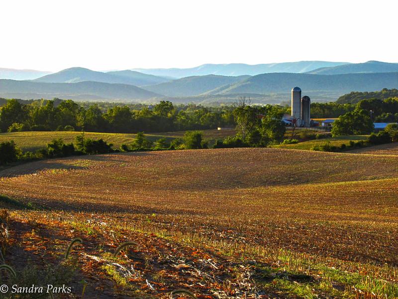 9-14-16: Fresh cut corn field, Thomas Spring Road